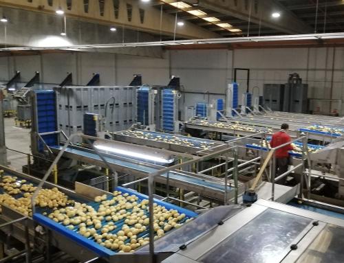 dnota, analiza la presencia del SARS-CoV-2 en el sector alimentario, con el control del virus en las instalaciones de uno de los principales mayoristas de patatas y cebollas, la empresa G.V. El Zamorano